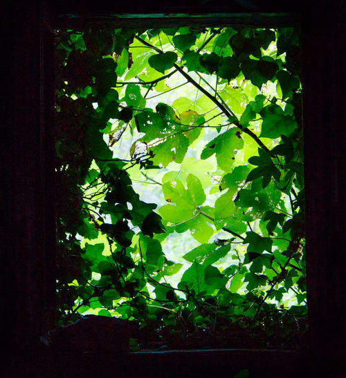 Close-up of green leaves against window