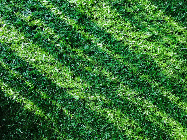 Green Grasses with shadow.Texture of grass field with lateral shadow, for your backgrounds.artificial turf Backgrounds Day Field Full Frame Grass Grass Area Green Color Growth Lawn Nature No People Outdoors Soccer Field