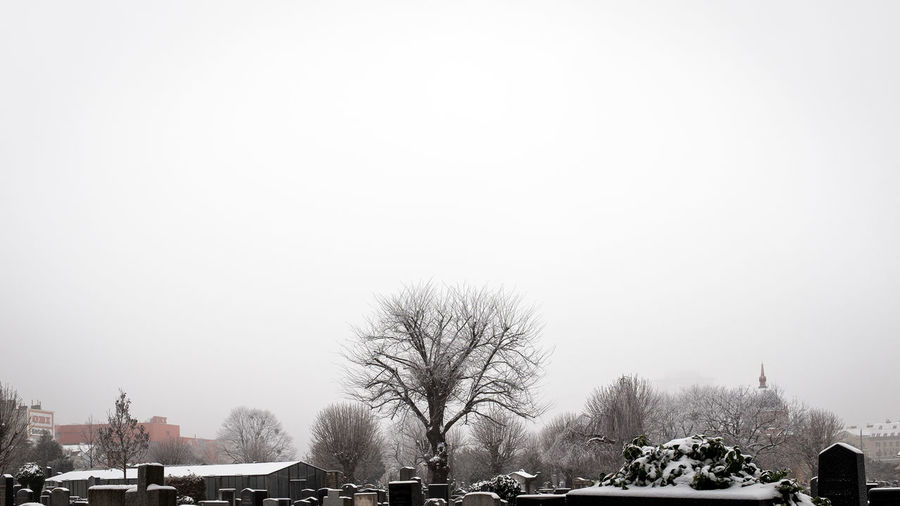 Bare trees at cemetery against clear sky