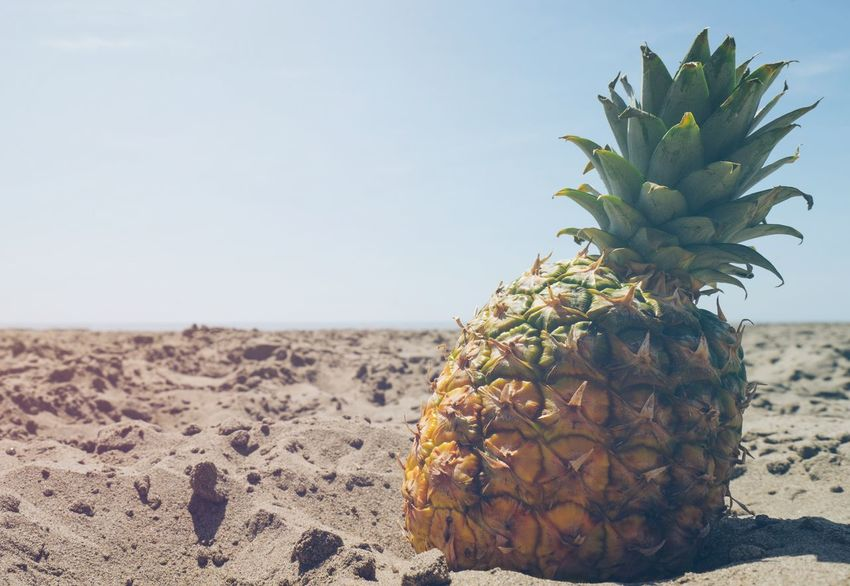 High-resolution photo of pineapples at the beach on a sunny day. Living that beach life and soaking up those beach vibes! Beach Beach Life Beach Photography Beach Vibes Beauty In Nature Focus On Foreground Golden Landscape Natural Pattern Nature No People Outdoors Pineapple Pineapples Sand Sky Summer Summer Vibes Summertime Sunny Day