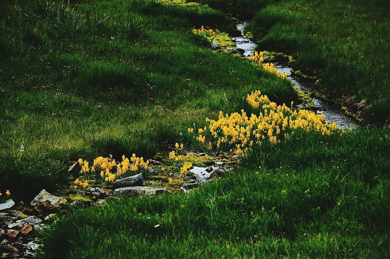 grass, nature, outdoors, growth, field, flower, no people, beauty in nature, day, tranquility, plant, scenics, landscape, animal themes, lake, water, yellow, tree