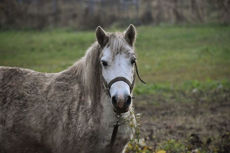 Portrait of a muddy horse in ranch