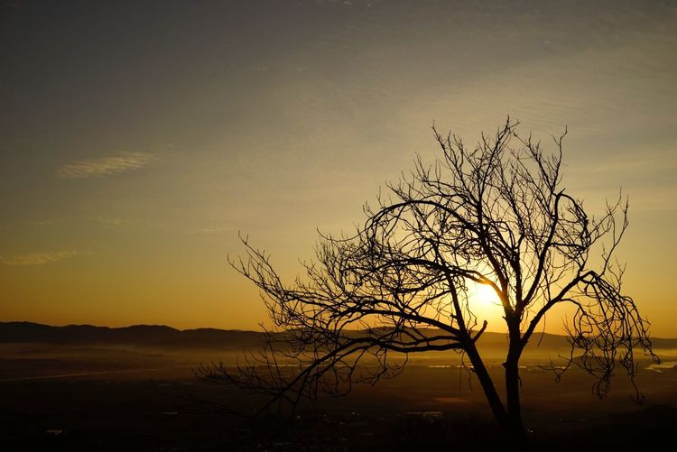 Sunset Beauty In Nature Tranquility Tranquil Scene Nature Majestic Scenics Sky Day Tree Bare Tree Outdoors No People