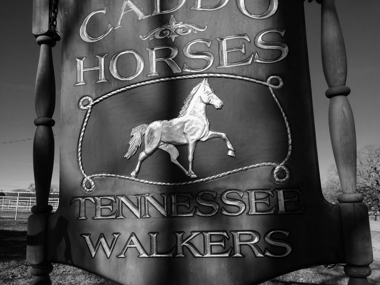 Caddo horses Horses Blackandwhite Black And White Black & White Blackandwhite Photography