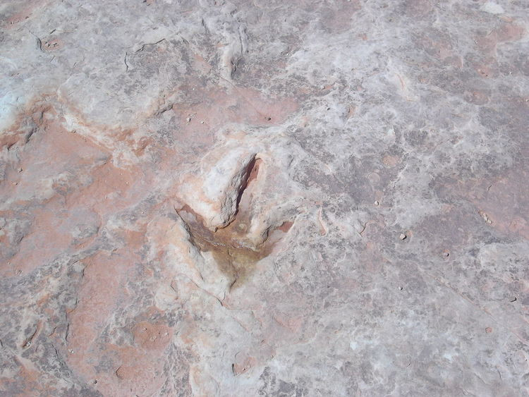Arizona Close-up Cretaceous Day Desert Dinasaur Dinasaur Tracks Tracks USA