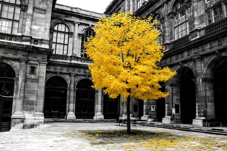 November Wien Architecture Nature Meets Civilization Autumn Colors Eyeem Colorkey Autumn Leaves Goodbye Autumn Streets Of Vienna Tree Abandoned Alone Check This Out Yellow Fall Colors Original Picturing Individuality Showcase: November