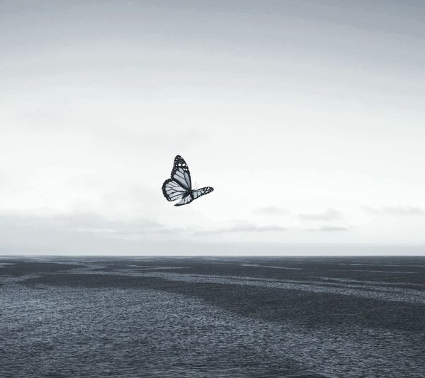 Butterfly Horizon Over Water Horizon Over Water Sea Water Scenics Tranquil Scene Tranquility Beauty In Nature Waterfront Flying Nature Getting Away From It All Mid-air Sky Blue Kiteboard Parachute Carefree Tourism Hobbies Outdoors First Eyeem Photo