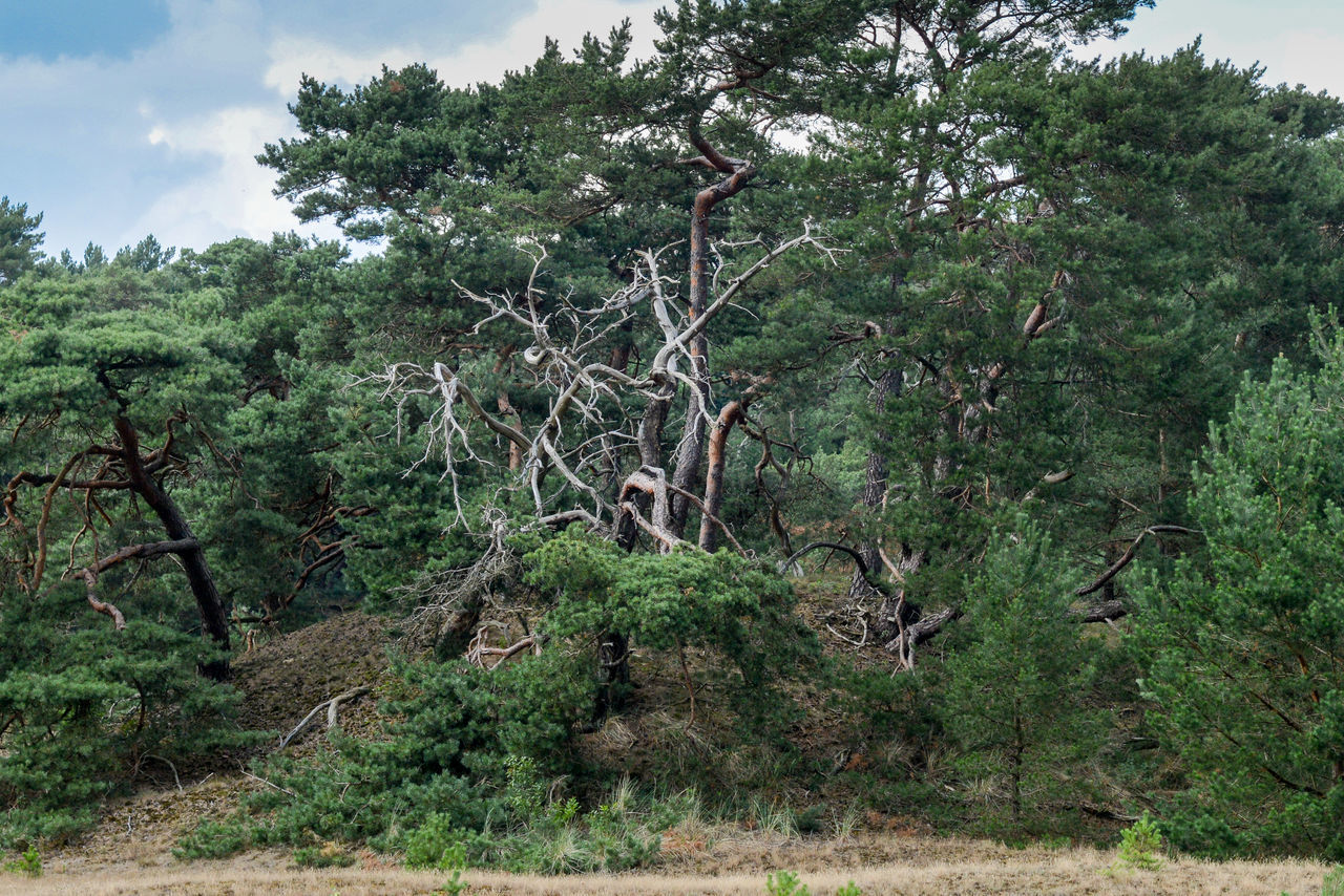 Tafelberg hiking route in Hulshorst the Netherlands Hulshorst Netherlands The Netherlands Day Forest Hiking Trail Holland Landscape Nature No People Outdoors Plant Tafelberg Tree
