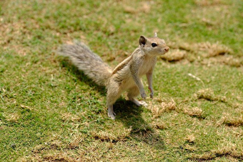 EyeEm Selects One Animal Animal Themes Animal Animal Wildlife Animals In The Wild Mammal No People Grass Nature Sunlight Day