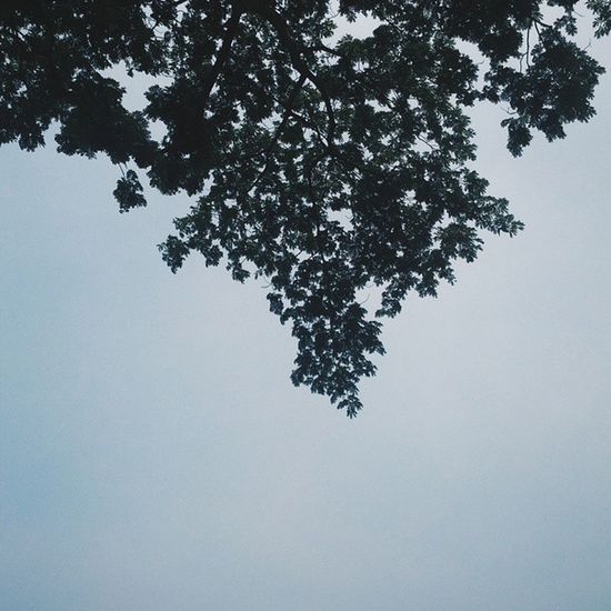 Leaves 🍂 Manila Nature Green Urban RizalPark Followme Philippines Sky Treeart Eyeem Philippines