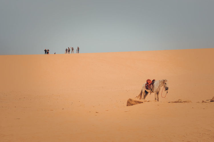 People in desert against clear sky