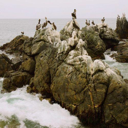 Bird on rock by sea against sky