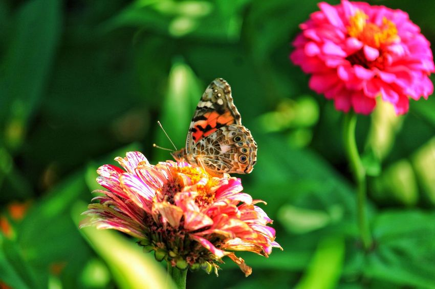 Beauty In Nature Butterfly Fragility Flower Head Close-up Focus On Foreground Color Glow Light