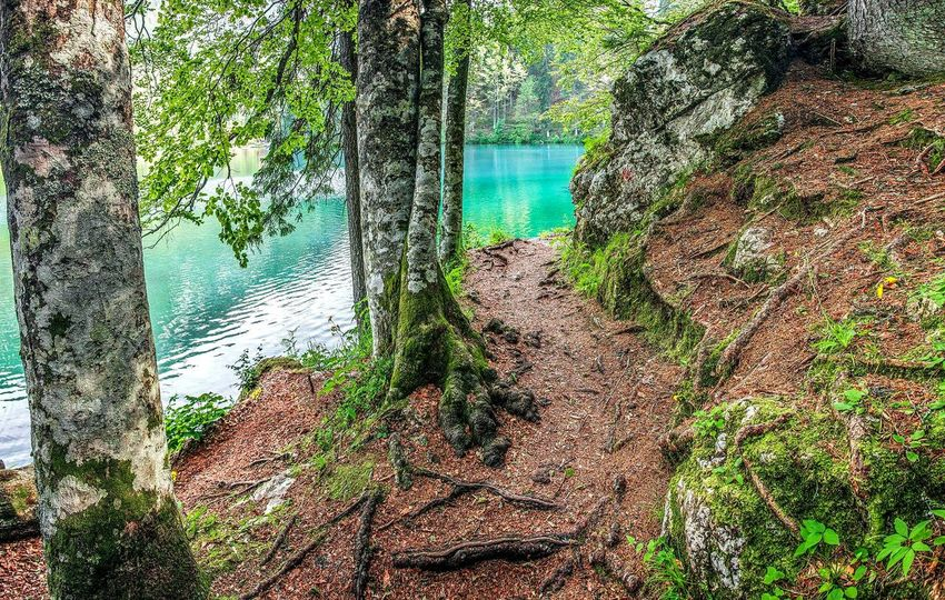 This is a path around a beautiful lake we saw in Italy. There are two lakes called Belopeška jezera (in Slovene). The colours of the lake are magical and so is the walk path around it. I love how you can see nature taking care of herself and how everything it's in her hands. I LOVE trips like this.. 3x huray for nature. Explore Bestoftheday Travel Travelling Adventure Lake Forest Forever Forestwalk EyeEm Nature Lover Travel Photography Enjoying Life Beautiful Photographer Photooftheday Mountain Water Beauty In Nature Naturelovers Love Happy Smile PhotoNature On Your Doorstep Summer