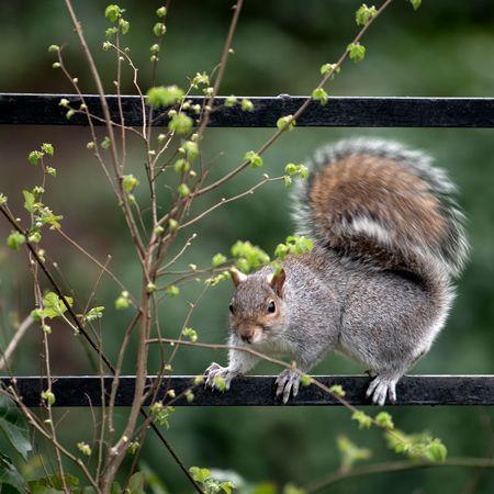 Animal Themes Animal Wildlife Animals In The Wild London Mammal Manor House Gardens Nature No People One Animal Outdoors Park Spring Springtime Squirrel Tree