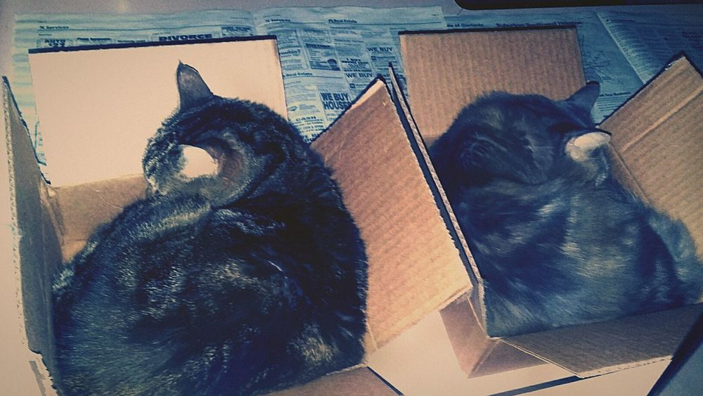 All cats and their box. Cat Saturation Soft Light Pets Focal Point #Lowlight Slumber Saturated Color Dark Hue Green Hues Blue Cat In The Box Soft Focus Lowlightphotography Overhead View Domestic Animals Mammal Animal Themes Close-up