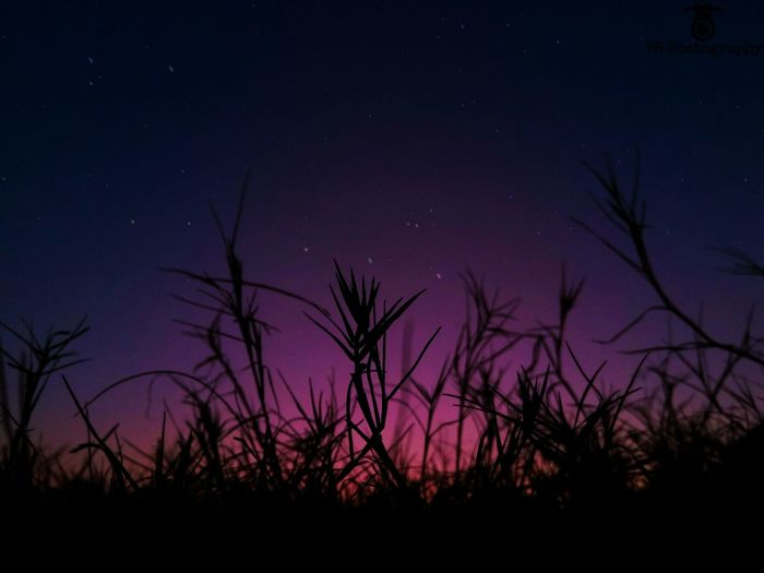 Nightphotography Night Astronomy Sky Galaxy Low Angle View Nature Star Field Milky Way Low Angle View Tail Grass Space Beauty In Nature sunset #sun #clouds #skylovers #sky #nature #beautifulinnature #naturalbeauty photography landscape Sunset Outdoors
