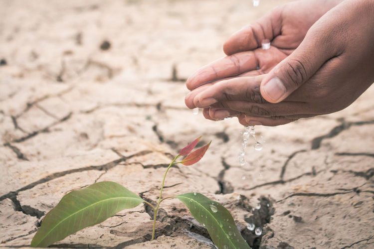Low section of man watering plant on barren field