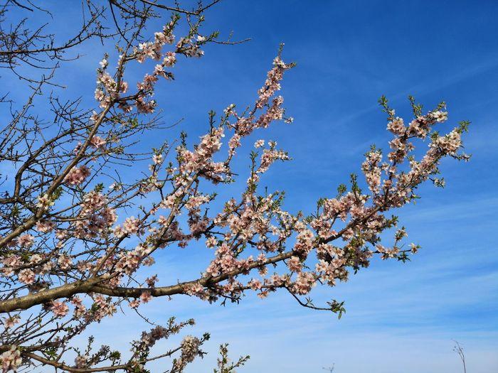 My Best Photo Tree Bird Branch Blue Flower Clear Sky Sky Animal Themes