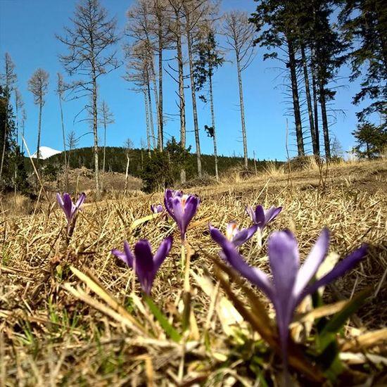 Under the mountains Outdoor Landscape Landscape_captures Lumia930 Mobilephotography Thisisslovakia Pureslovakia ShotOnMyLumia