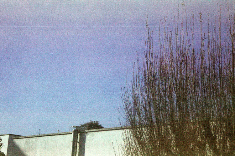 Found and Reused Film. Sky No People Day Tree Clear Sky Minimal New Color Leiblingsteil Filmphotography Lines