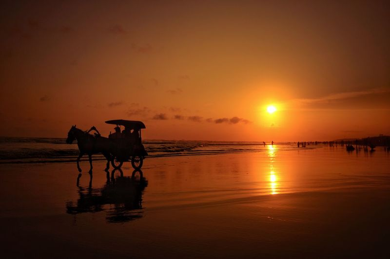 shadow Water Sunset Sea Silhouette Sun Reflection Beach Sand Sky Horse Romantic Sky Horsedrawn