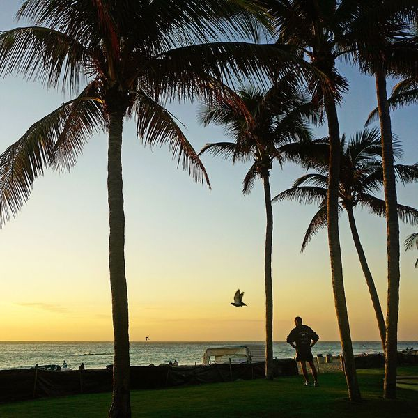 Taking time to enjoy a sunrise. Palm Tree Beach Men Beauty In Nature Outdoors Tranquility Sunrise