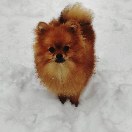 Dog Dog❤ собачка собака My Dog