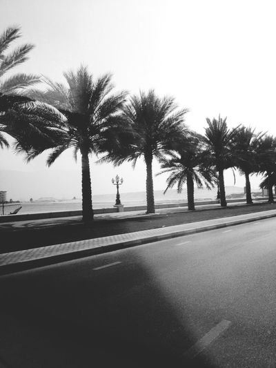 Palm Trees Beach On The Road Photography