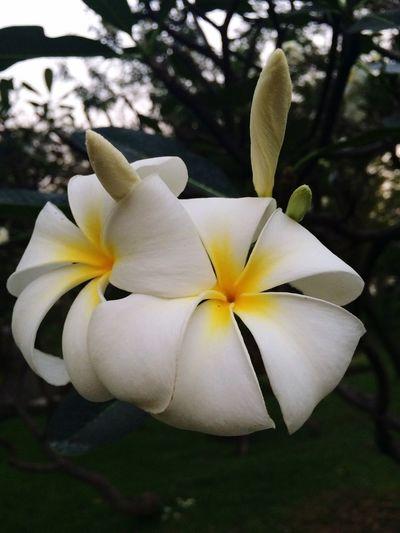 Beautiful Flower Flowers Nautural Beauty