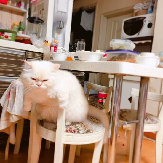 I'm still Hungry Perhaps Heema Lovely Gluttony Heema Cute♡bOY