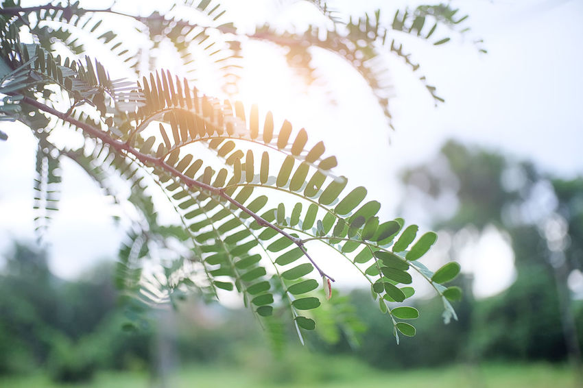 Mountains during sunset. Beautiful natural landscape nature landscape forest. Grass Nature Nature Photography Textured  Tree Backgrounds Beauty In Nature Close-up Day Fern Focus On Foreground Grassy Green Color Growth Land Landscape Leaf Mountains Nature Nature Beauty Nature_collection Plant Plant Part Sky Tree