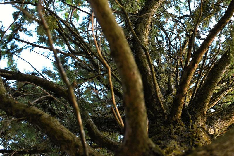 Tree Plant Tree