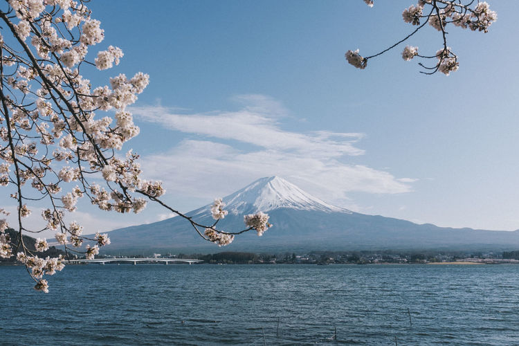 Mt Fuji in Spring Desktop Fujisan Sakura Beauty In Nature Blossom Cherry Blossom Cherry Tree Day Flower Flowering Plant Freshness Mountain Mtfuji Nature No People Outdoors Plant Scenics - Nature Sky Springtime Tranquil Scene Tranquility Tree Wallpaper Water