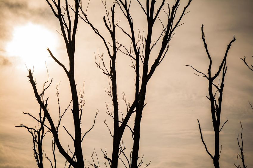 Some bare trees against the sunlight EyeEm Selects Sky Plant Beauty In Nature Nature No People Growth Tree Tranquility Branch Low Angle View Silhouette Outdoors Cloud - Sky Day Close-up Sunset Bare Tree Tranquil Scene Sunlight Plant Stem