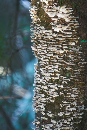 Tree Close-up Nature Growth Tree Trunk Fungi Mushrooms Fungi On Tree Mycology Mycologie Growing Old Growth Nursing Log Beauty In Nature Pattern Wonderful Old Eco System RebirthNo People Repurposed Organic Ointment Essentialoils Natural Remedies