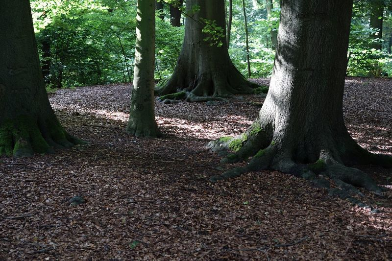 Trees Tree Nature Landscape #Nature #photography Nature Photography Boomstam Boom Wood Park Antwerpen Antwerp Antwerp Belgium Leaves Dead Leaves Ground Level View