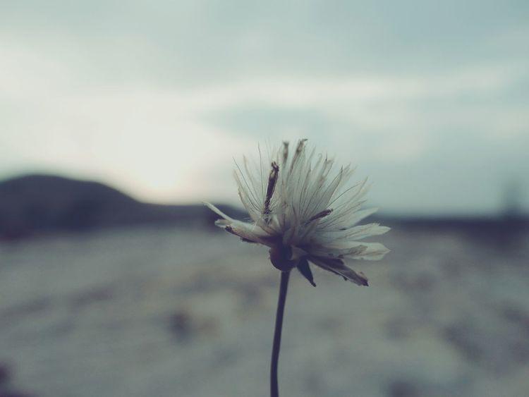 Pastel Power Nature Photography Naturelovers Sunset Flower Defocus