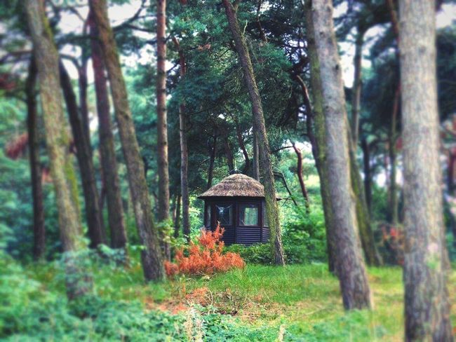 Little Hut Forest Photography Forest Path Forest Trees EyeEm Nature Lover Eye4photography  EyeEm Gallery EyeEm Best Edits EyeEm Best Shots Beekse Bergen Safari Park Safari Shelter Dutch Landscape Check This Out Hello World Hanging Out Taking Photos Out And About No People Outdoor Photography Beauty In Nature Nature Nature Photography Trees Collection