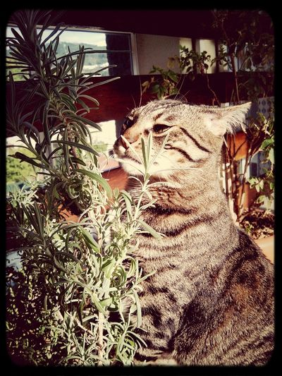 Smelling the flowers Cat Lovers Eyem Animal Lovers Cat Watching