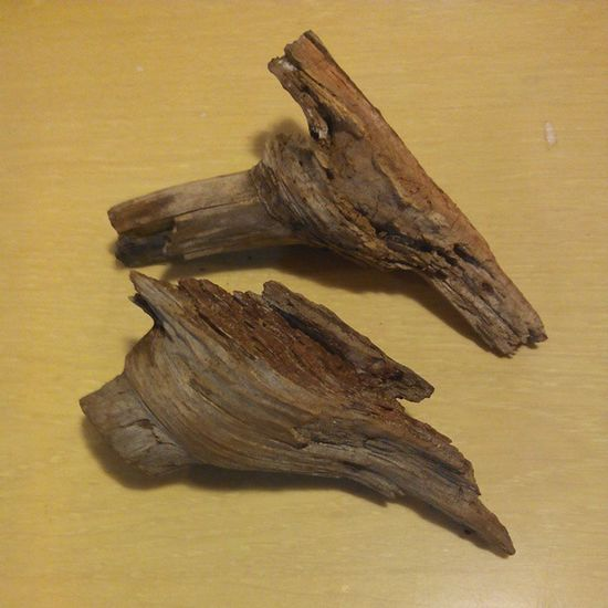 A couple of pine wood knots we picked up while Geocaching today. Wonder what @pedronabreu will carve them in...?