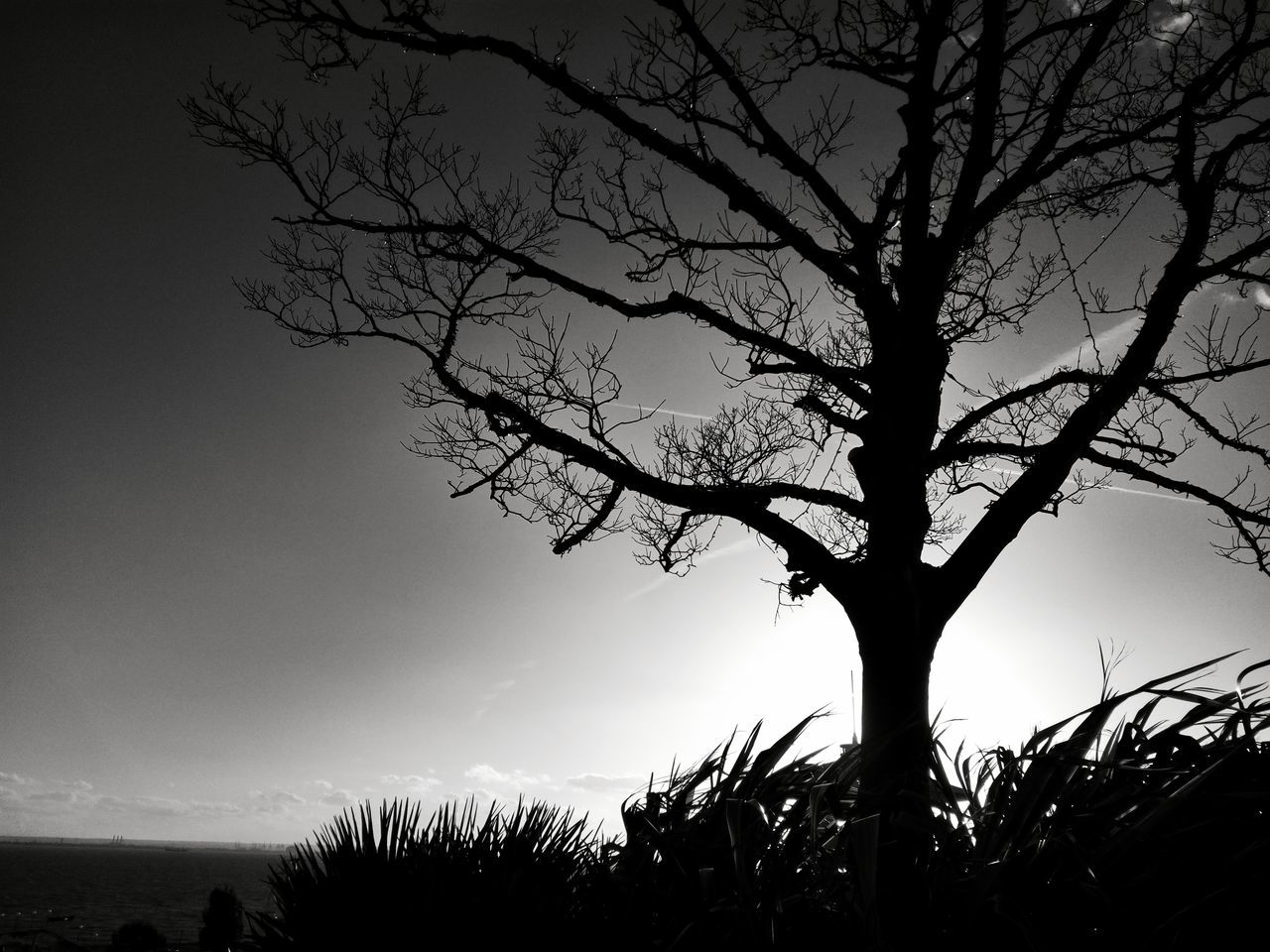 tree, tranquility, beauty in nature, nature, sky, bare tree, tranquil scene, silhouette, branch, scenics, outdoors, no people, landscape, low angle view, tree trunk, growth, lone, day
