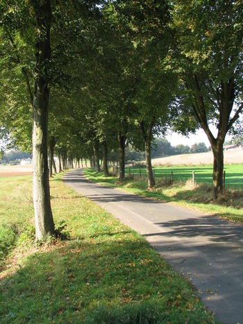 Allee Avenue Avenue Of Trees Beauty In Nature Bäume Day Grass Green Color Growth Landscape Nature No People Outdoors Road Scenics Shadow Summer Sunlight Tree Tree Trunk Baumallee Baum Weg Sommer Schattenspiel