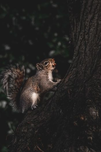 Eating Summer Spring Adorable Nut Mammal Fluffy Park Outdoors Squirrel Animal Wildlife Tree Animals In The Wild Animal Themes Animal One Animal Mammal Vertebrate Plant No People Nature Trunk Tree Trunk Focus On Foreground Forest Rodent Day Outdoors Looking Away