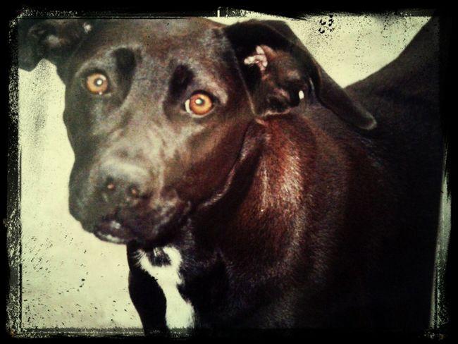 Dogstagram Doglover muito Baby Shakira!!!!