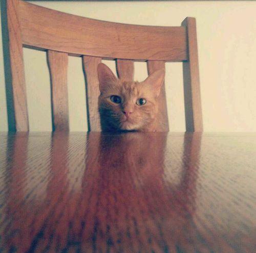 So adorable! Adorable Cat Cute Orange