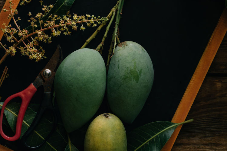 Tropical Tropical Fruit Mango Ripe Harvest Healthy Eating Food Fruit Food And Drink Leaf Freshness Green Color Wellbeing No People Close-up Nature Still Life Plant Part Indoors  Plant Growth Raw Food Table Group Of Objects Agriculture Organic Scissors