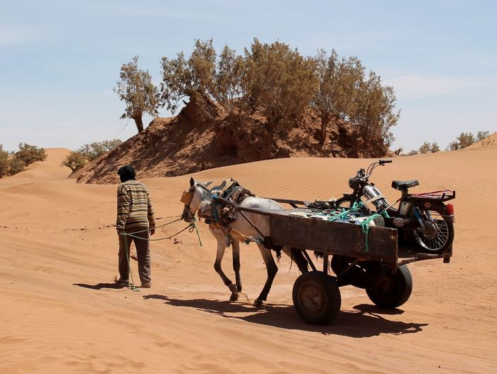 Rear View Of Man Walking With Horse Cart At Sahara Desert