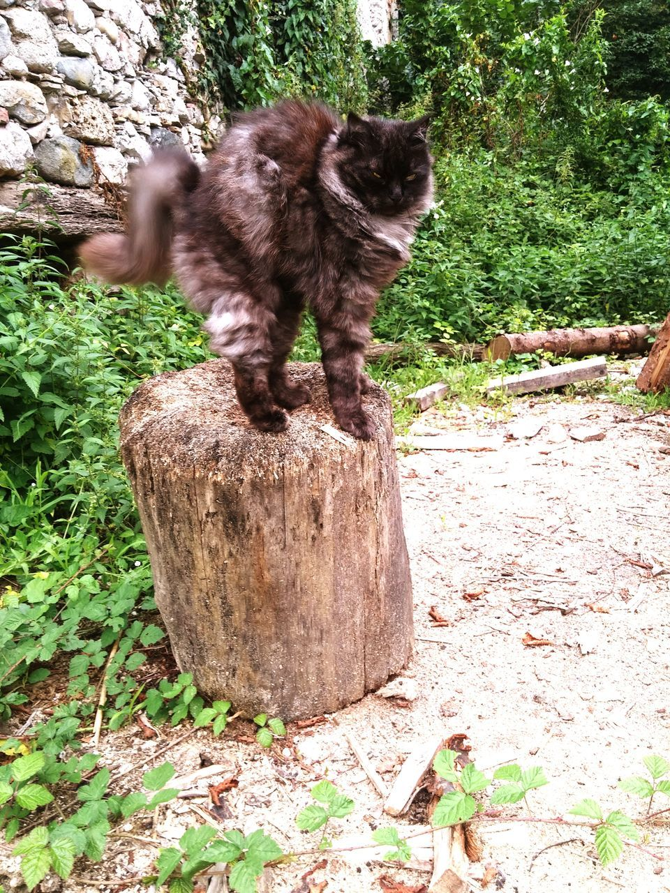 one animal, animal themes, pets, domestic animals, mammal, domestic cat, no people, day, sitting, outdoors, feline, full length, nature, tree