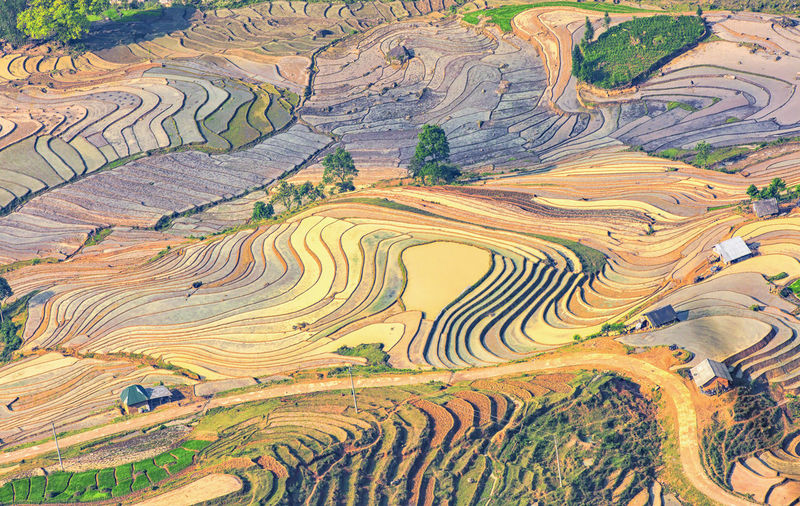 rice terraces fall season Agriculture Day Landscape Nature No People Terraced Field